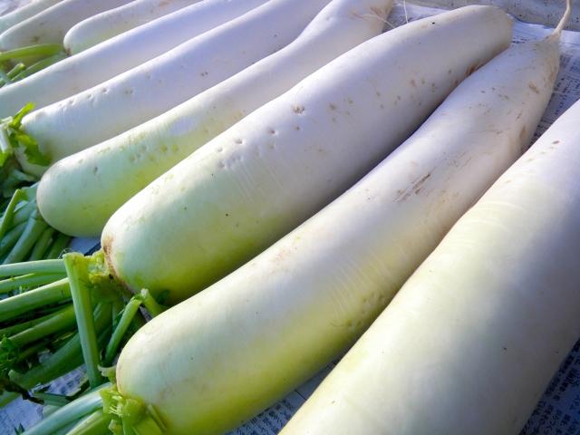 免疫力を高めて健康に良い?大根を家庭菜園で栽培&保存方法