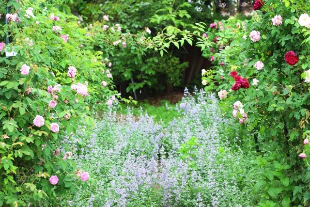 米ぬか肥料の効果&作り方を教えます!バラには肥料が大事!