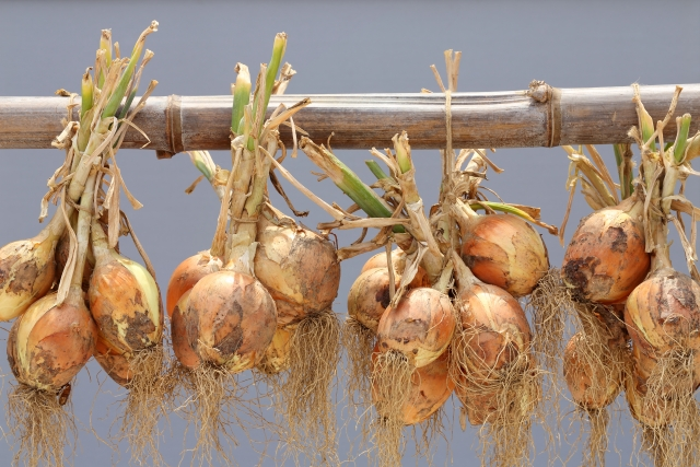 玉ねぎを長期保存するための吊るし方をご紹介します!