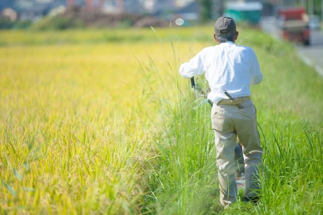 日本の農業が直面している問題点とは?どんな解決策がある?