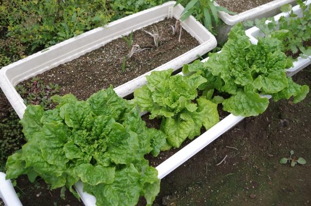 プランターで野菜栽培!防虫ネットで失敗知らず!?