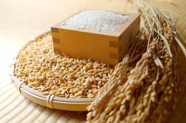 籾は殻付きの玄米、糠層を除くと精米、すべて同じお米です
