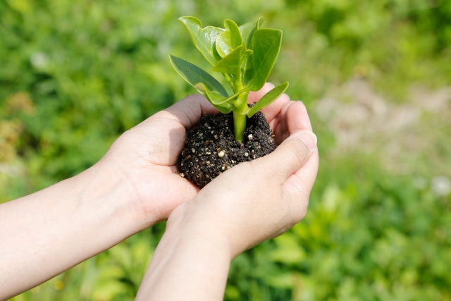 バナナとキウイの家庭菜園での植え方を分かりやすく解説