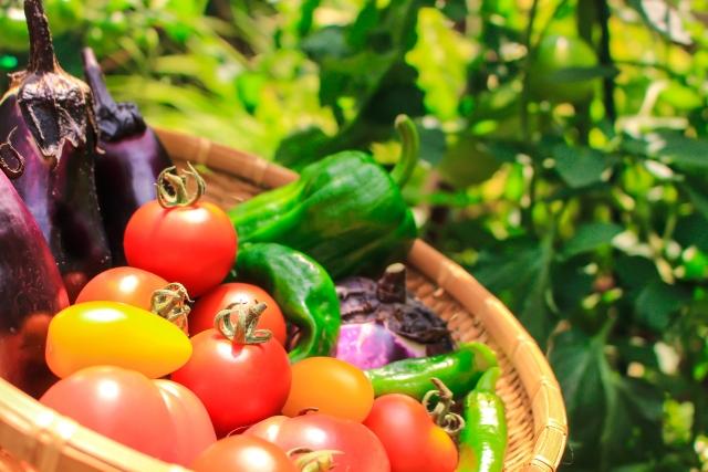 オーガニック野菜が高い!安く仕入れるための3つの方法とは