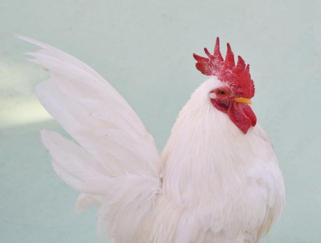 電子レンジでも鶏肉は簡単に料理できる!種類や栄養もご紹介