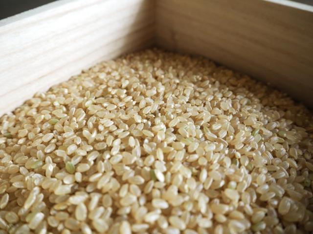 玄米から虫が発生してしまった!精米機にかけることは可能?
